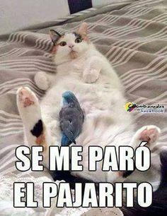jeje iguel  que yo jeje okis- no soy mujer pero igual XD jeje Funny Kermit Memes, Mexican Funny Memes, Mexican Humor, Funny Spanish Memes, Spanish Humor, Funny Jokes, Hilarious, Funny Shit, Funny Stuff