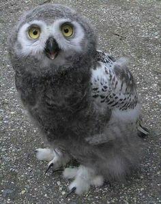 Cute little fellow!