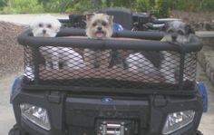 Read information on rocky mountain atv. Check the webpage to get more information This is must see web content. Puppy Carrier, Cavachon Puppies, Diy Dog Crate, Big Girl Toys, Ghost Dog, Cat Attack, Dog Seat, Atv Accessories, Quad