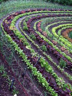 Vegetable potager garden