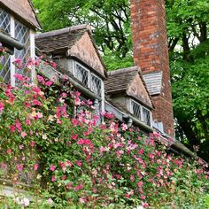 One more picture from the amazing Cothay Manor @cothaymanorgardens. I have never seen so many flowers on Rosa chinensis Mutabilis. Tomorrow I go to Wollerton Old Hall @wollertonohg. I'm looking so much forward ... #garden #clausdalby #blomster #flowers #cothaymanor