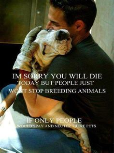 Please repost---if this helps one person to adopt from a shelter, one person to spay or neuter their pet, one less pet to die unloved...than we've done something good.