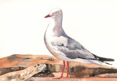 Seagull Painting  bird print of watercolor by Splodgepodge on Etsy, $20.00