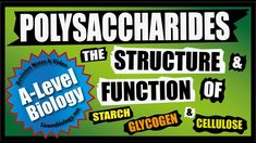A Level Biology NEW: Polysaccharides, Starch, Glycogen and Cellulose A-Level Biology Revision Notes A Level Biology Revision, Hydrogen Bond, Revision Notes, Animal Cell, Biology Lessons, Structure And Function, Makeup Humor, Physical Properties