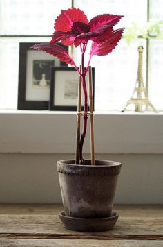 Idea Of Making Plant Pots At Home // Flower Pots From Cement Marbles // Home Decoration Ideas – Top Soop Inside Plants, Big Plants, Exotic Plants, Growing Plants, Garden Plants, Indoor Plants, Topiary Garden, Indoor Flowers, Artificial Flowers