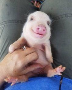 9. Un cochon très swag avec ses lunettes de soleil et un