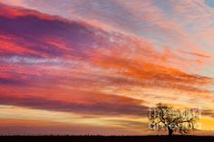 Lonesome tree out in the country farm fields starting a beautiful day off with a morning epic colorful sunrise kiss from mother nature scenic view looking east in North Boulder County Colorado. Fine art photography prints, decorative canvas prints, acrylic prints, metal print wall art for sale on FineArtAmerica.com. Prints starting at $25. Copyright: James Bo Insogna