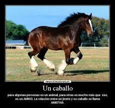 Resultado de imagen para frases de caballos en libertad