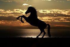 La aromaterapia podría ser beneficiosa para los caballos porque disminuye los niveles de estrés. Así lo muestra el estudio que te voy a presentar hoy.