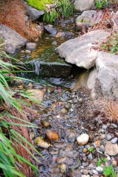 if we build a dry creek bed for the drainage easement, I'd love it to have cascading places like this when the rain brings the water through it