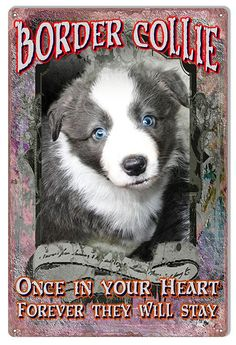 Border Collie In Your Heart Reproduction Animal Metal  Sign 12x18