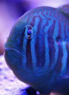 http://www.nano-reef.com/featured/_/2014/gramophone-r80