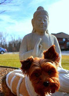 Más tamaños | Blessings from Budda | Flickr: ¡Intercambio de fotos!