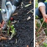 Les hydrangéas ne sont pas difficiles à cultiver, certains mêmes s'accommodant de conditions très variables. Le tout est de respecter les règles de base de chaque groupe et de rejeter les idées reçues. Il existe des hydrangéas pour tous les sols, sauf très crayeux, et tous les climats pas trop froids.