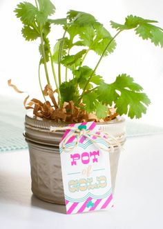 St Patty's Day Pot of Gold - but use for the Teacher Appreciation herb plant gifts.
