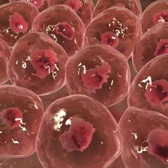 Image result for human skin cells