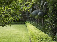 Buxus hedge with lawn