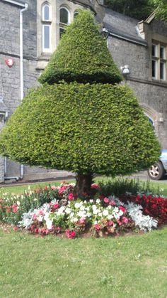Pruned tree, Weston Super Mare park