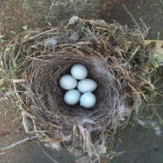 Wren's nest