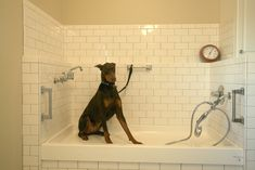 Something for Animal Lovers – A Tiled Dog Spa Room at Elk Meadow