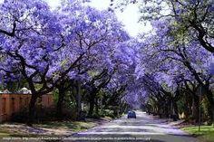 Resultado de imagen para beautiful trees