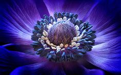 International Garden Photographer of the Year is the world's premier competition and exhibition specialising in garden, plant, flower…