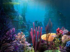 Ocean life.