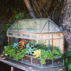 vintage wall terrarium