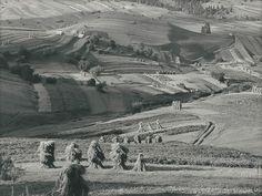 Martin Martinček: Žatva:1964
