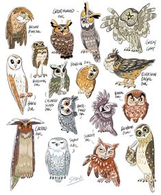 I have recently developed an owl fascination. As an art student/crafty person in general I do. Illustration Inspiration, Illustration Art, Bird Drawings, Animal Drawings, Drawing Birds, Owl Art, Bird Art, Owl Pictures, Arte Sketchbook