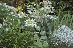 A small planting bed can have big impact if you stick to a limited color palette.