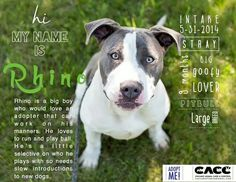 Adoptable at #CACC adoptable pets on Facebook in #Chicago