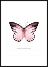 Butterfly pink, white background poster