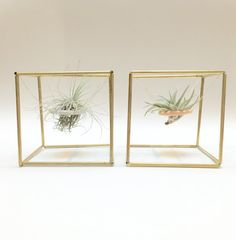 Brass Himmeli Cube 1 indoor planter air plant by SproutFriends