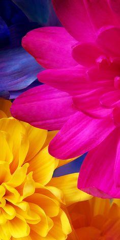 Beautiful Flowers Wallpapers, Beautiful Nature Wallpaper, Colorful Wallpaper, Cute Wallpapers, Leaves Wallpaper Iphone, Flower Phone Wallpaper, Cellphone Wallpaper, Flower Backgrounds, Wallpaper Backgrounds