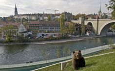 Visitors to Bern can observe live bears right in the heart of the Swiss capital.