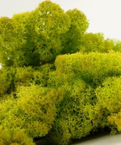 Natural Spring Green Softened Preserved Norwegian (Lichen) Reindeer Moss 11 oz. bag $9.99 - would be really pretty for jazzing up centerpieces