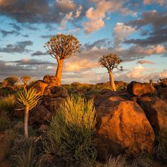 Quiver Tree Forest, Keetmanshoop, Namibia (Vertorama by Hougaard Malan Photography) Landscape Photography Tips, Photography Tours, Landscape Photographers, Landscape Photos, Creative Landscape, Urban Landscape, Abstract Landscape, Agaves, Kerala