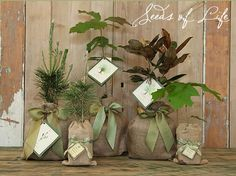 I love the idea of giving plants as gifts. Wrap the pot with burlap and tie a pretty ribbon with a pretty tag and you've got a wonderful gift.
