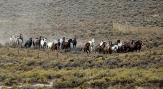 Comments Due by Dec 21, 2015!! The BLM is ACCEPTING PUBLIC COMMENTS on an Environmental Assessment issued to correct legal violations in its conduct of the massive 2014 Wyoming Checkerboard roundup, in which 1,263 federally protected wild horses were captured & permanently removed from over 2.4 million acres of public & private lands (71% of which is public) in the southern part of the state. At least 100 horses were killed during & after the roundup.