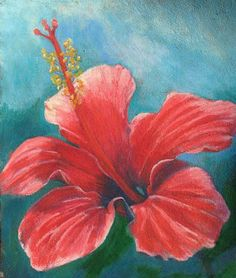 oil pastel on black paper | Red Hibiscus in oil pastel
