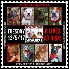 DEATH ROW DOGS 12/5/17 SHARE !!! Dedicated to Saving NYC Shelter Animals
