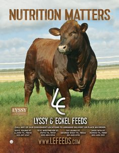 Both our designer and client LOVED this new print ad for Lyssy and Eckel Feeds.