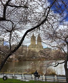 Spring in Central Park NYC