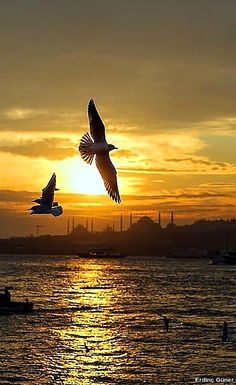 Ahmet krtl - Istanbul Türkiye (This is a very interesting place! Beautiful Sunrise, Life Is Beautiful, Beautiful Places, Beautiful Pictures, Ansel Adams, Istanbul City, All Nature, Ciel, Bald Eagle