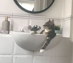 Feline Great: Classic Photos of Cats Being Cats - World's largest collection of cat memes and other animals Charlie Day, Getting A Kitten, Sleep On The Floor, Video Chat, Photo Chat, Cat Sitting, First Home, Cat Memes, Cool Cats