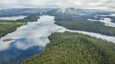 Beer relies on healthy, functioning forests. Aerial view of Southeast Alaska's Tongass National Forest during flight from Prince of Wales Island to Ketchikan. Photo © Erika Nortemann/TNC