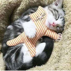 So funny! A cat sleeping with a stuffed cat! Cute Cats And Kittens, I Love Cats, Crazy Cats, Cool Cats, Kittens Cutest, Pretty Cats, Beautiful Cats, Animals Beautiful, Image Chat
