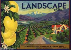Crate Label Vintage RARE Ventura Montalvo Landscape 1930s Landscape Original