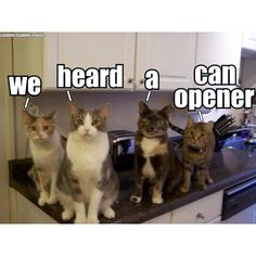 yep, and they won't leave until you let 'em sniff it and see for themselves that it is NOT tuna....